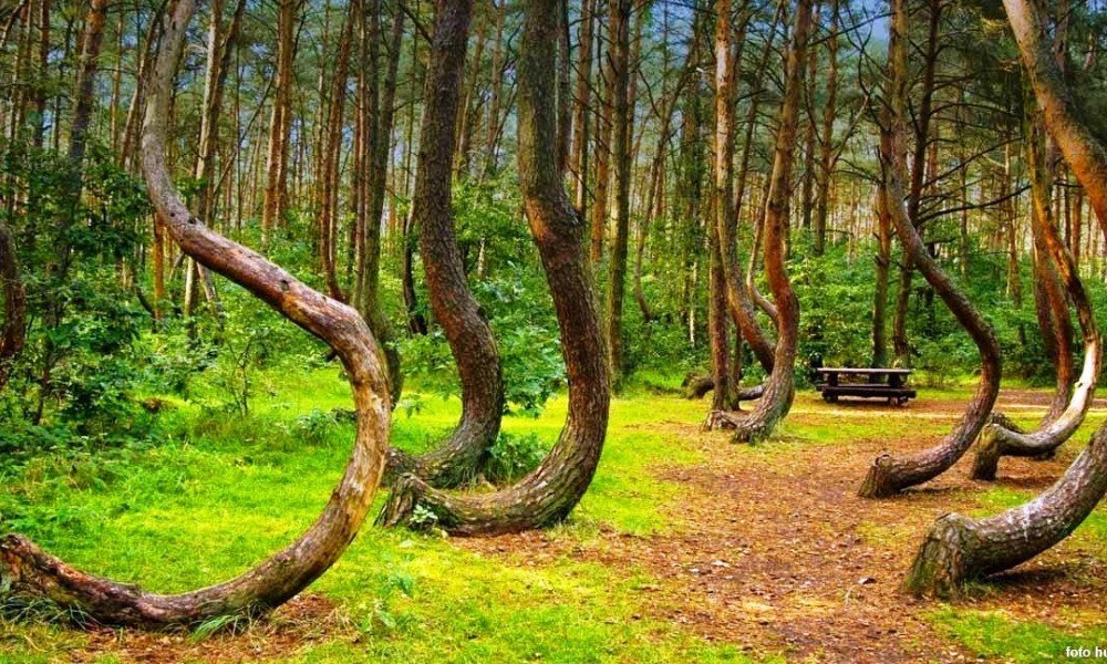 ترسناکترین جنگل دنیا در رومانی واقع است