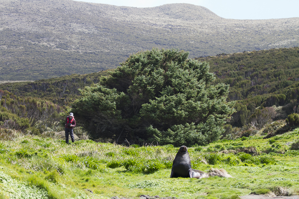 این درخت تنهاترین درخت دنیاست
