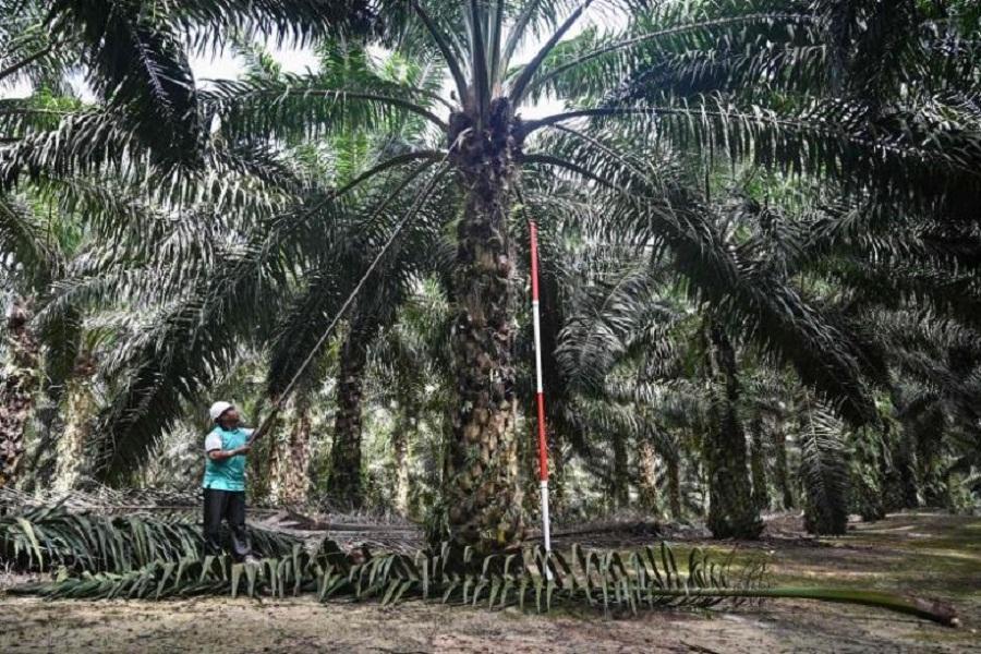 هشدار مالزی و اندونزی به اروپا در مورد روغن پالم