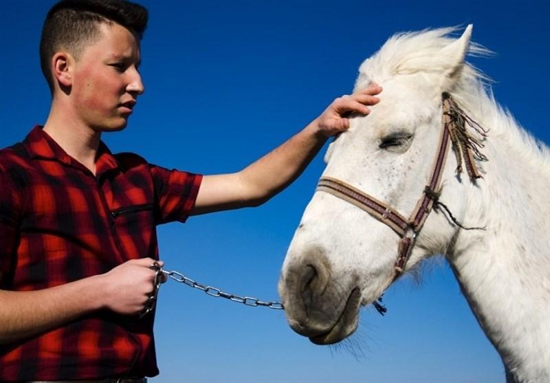 تاتارها و پرورش اسب در قونیه ترکیه