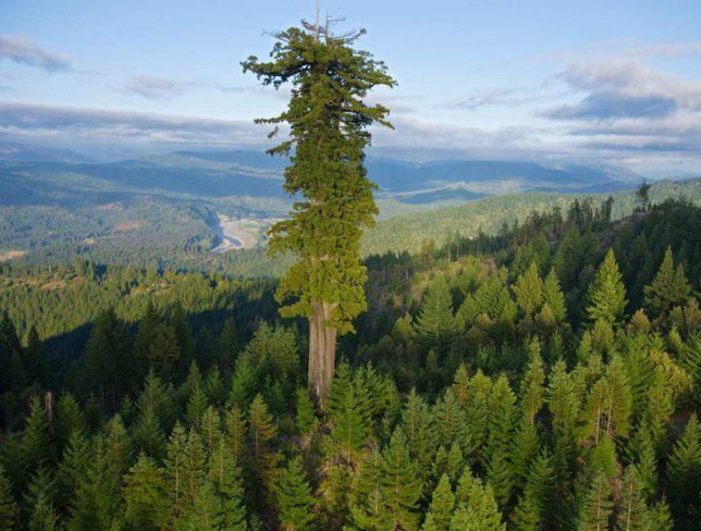 بلندترین درخت جهان در جزایر مالزی کشف شد