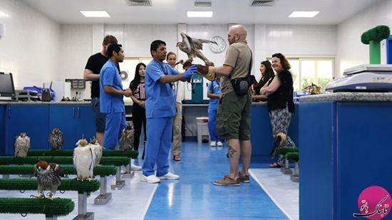 بیمارستان بزرگی برای شاهین ها در امارات!