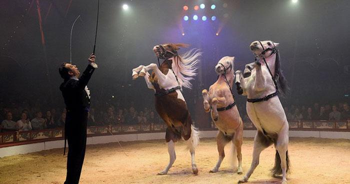 کار جالب و زیبای سیرک آلمانی در حمایت از حیوانات!