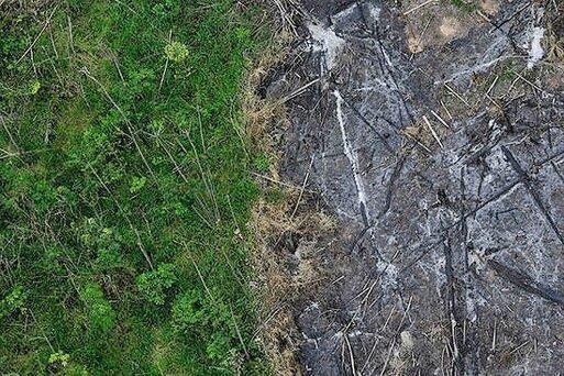 جنگل های آمازون با شدتی بی سابقه می سوزند