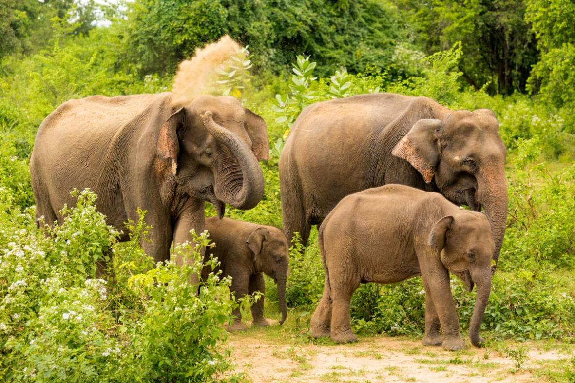 پارک ملی اوداوالاوه (سریلانکا)