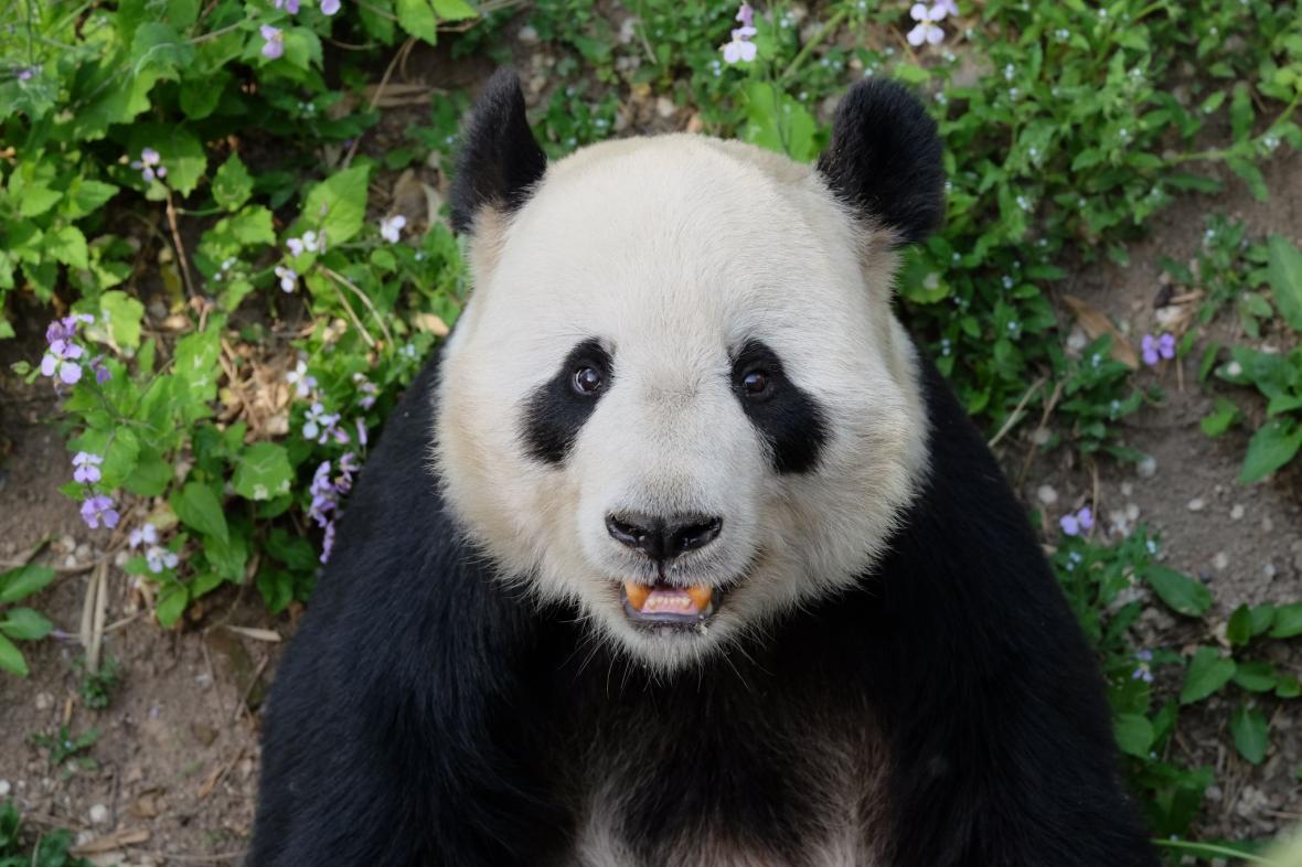 باغ وحش پکن (چین)