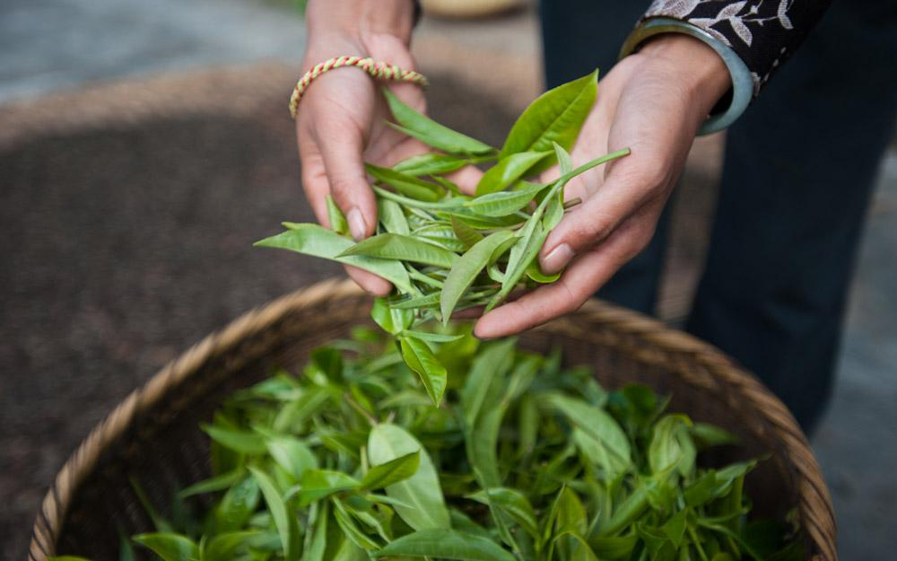 برترین شهرهای چین از نظر فرهنگ چای