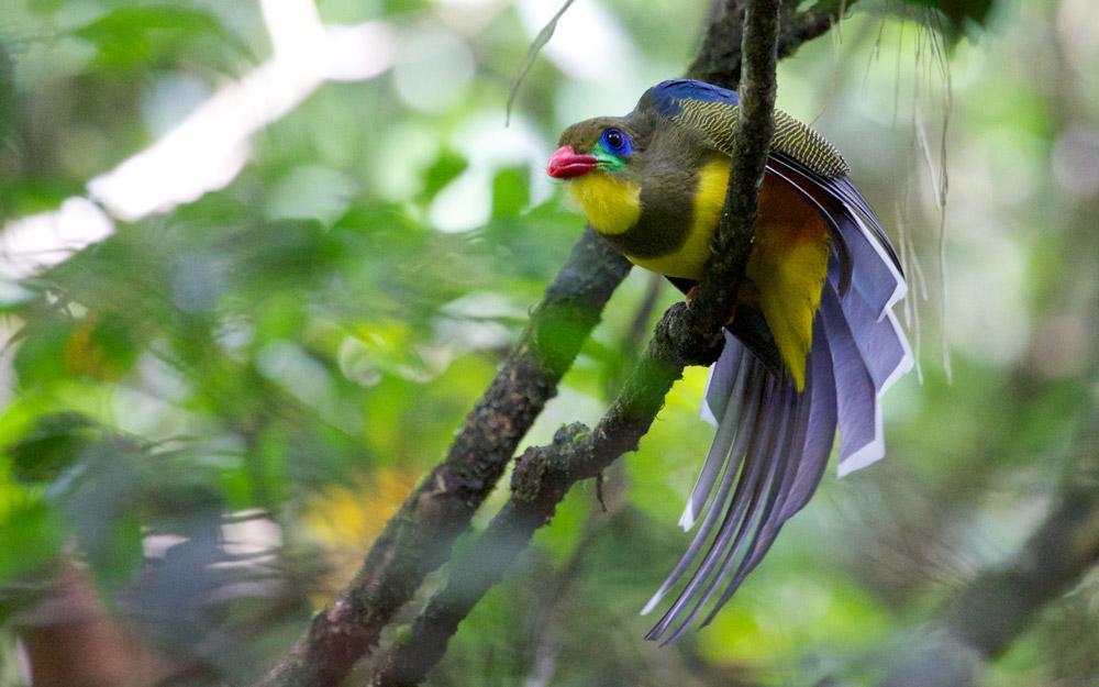 طبیعت بی مانند پارک ملی Gunung Gede Pangrango اندونزی