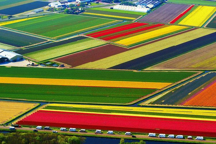 بهترین مکان های دنیا برای دیدن گل های زیبا