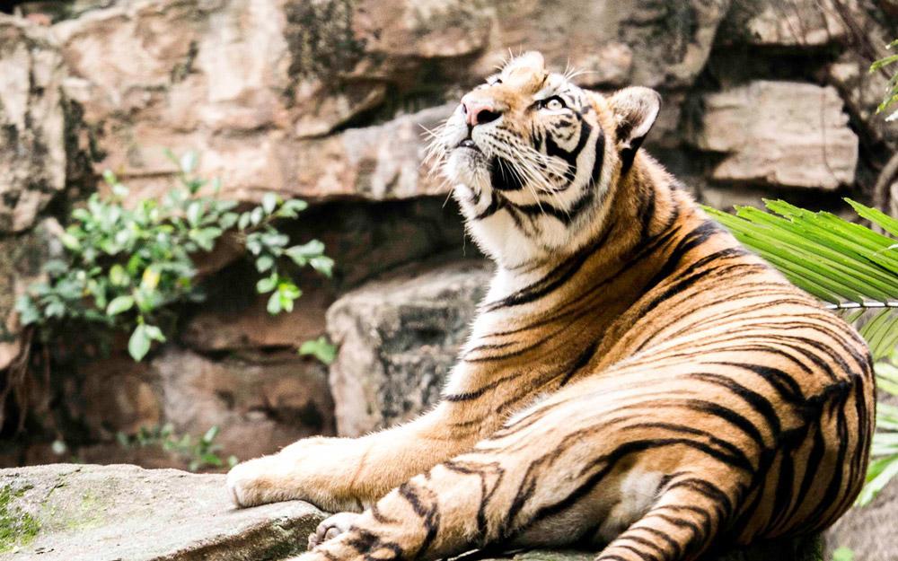 باغ وحش گوانجو (چین)