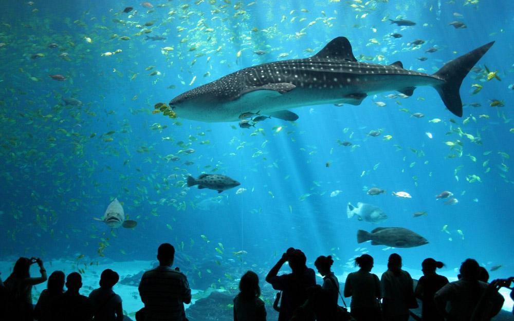 پارک اقیانوس شناسی بانکوک (تایلند)