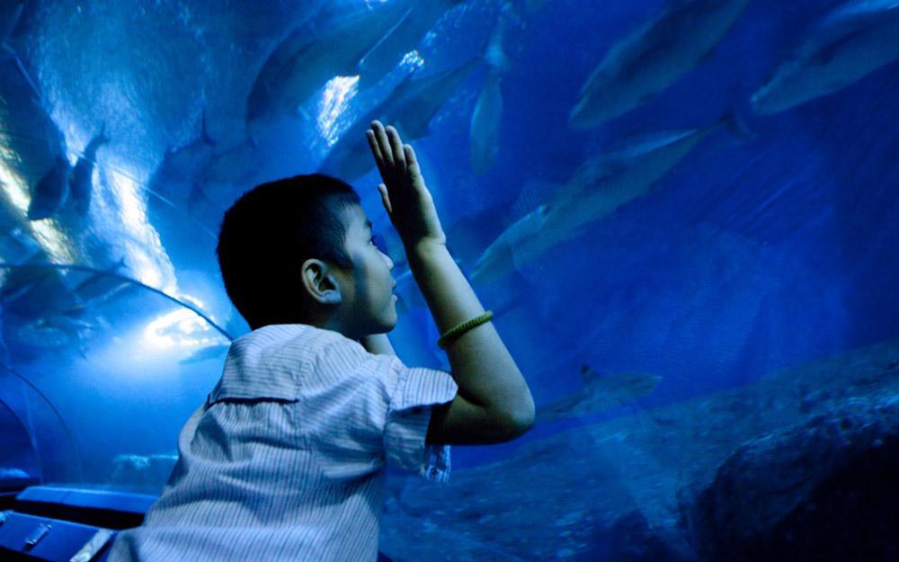دنیای زیر آب پاتایا (تایلند)
