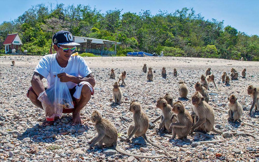 جزیره میمون پاتایا (تایلند)